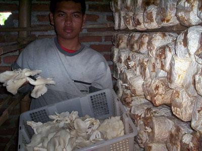 sate jamur 3