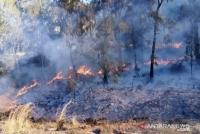 Kapolres-Dandim Lumajang Padamkan Kebakaran Hutan Gunung Semeru