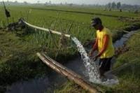 Dinas Pertanian Kewalahan Layani Permintaan Surat Rekomendasi