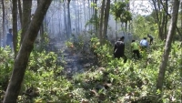 Banyak Hutan Terbakar, Perhutani Merugi Rp 200 Juta