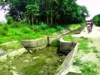 Tangkis Bendungan Rusak, Ratusan Hektar Sawah Terancam Gagal Panen
