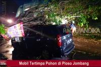 Hujan Lebat, Pohon Tumbang Menimpa Mobil di Ploso Jombang