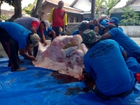 Dinas Perikanan Dan Peternakan Kabupaten Kediri, Temukan Cacing Pita Pada Hewan Qurban