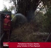 Gara-gara Bakar Sampah, Rumpun Bambu di Pace Nganjuk Terbakar